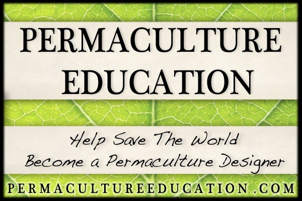 permaculture_education_david