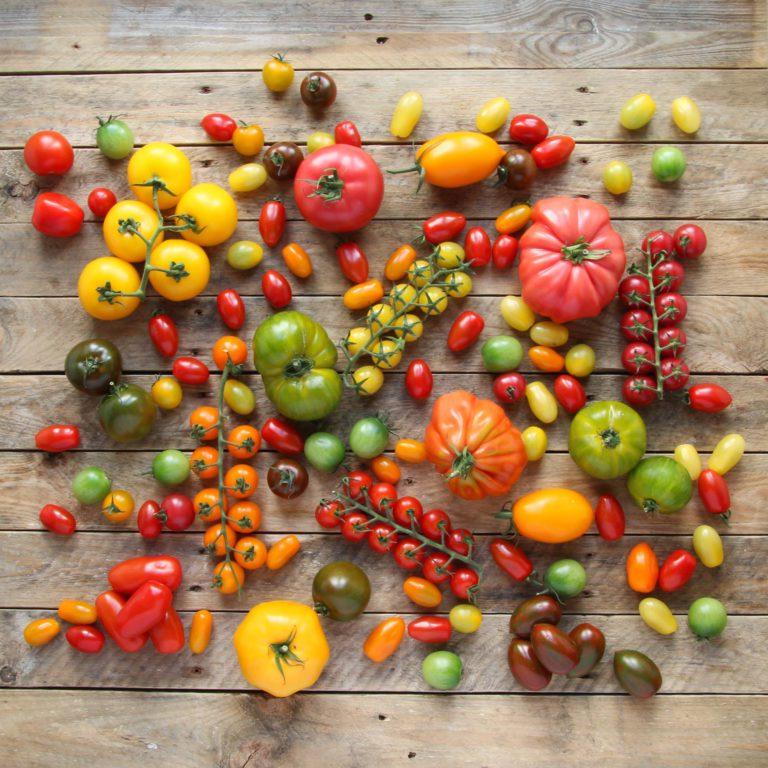 TomatoStall Image1 768x768