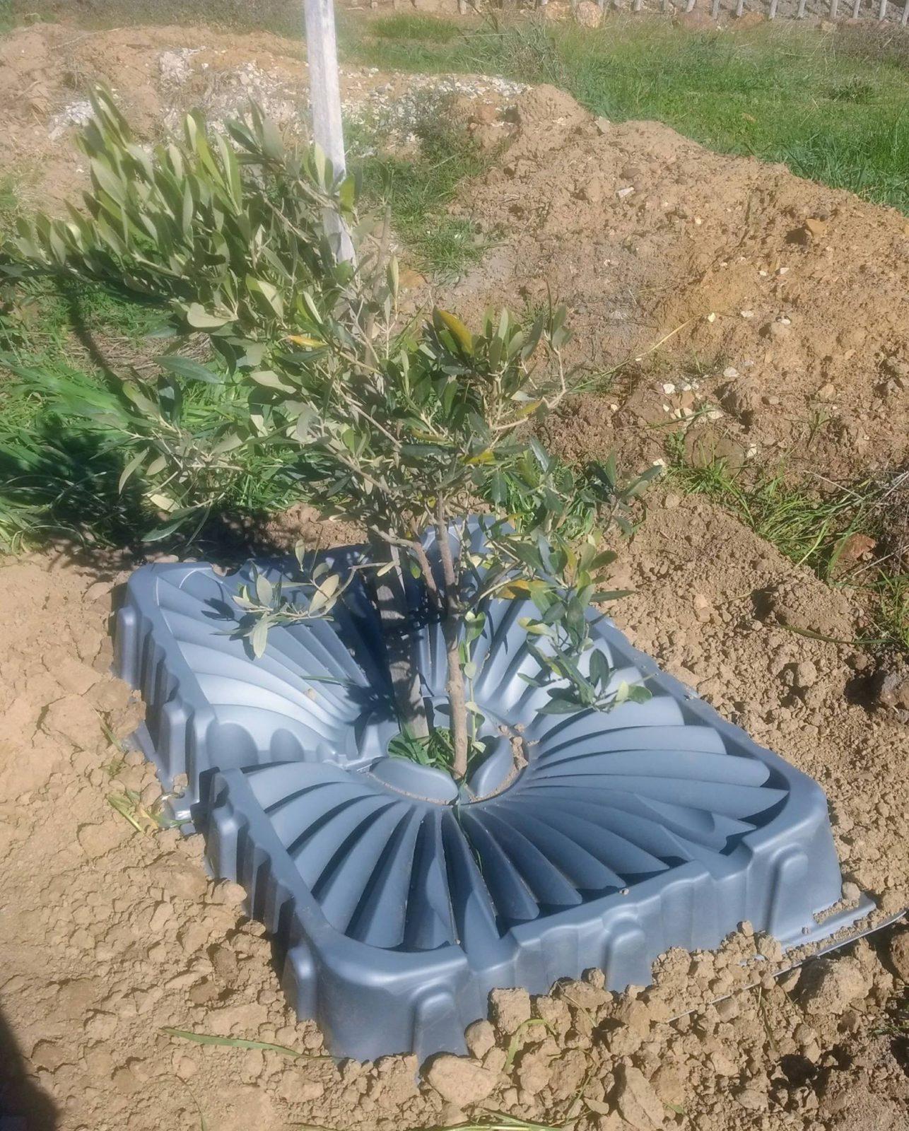 Tree Tray 10 Pack