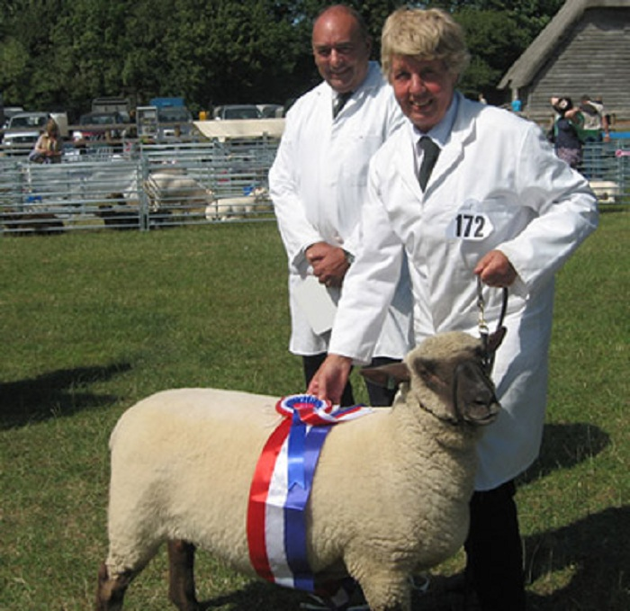 sheep 28 PI1